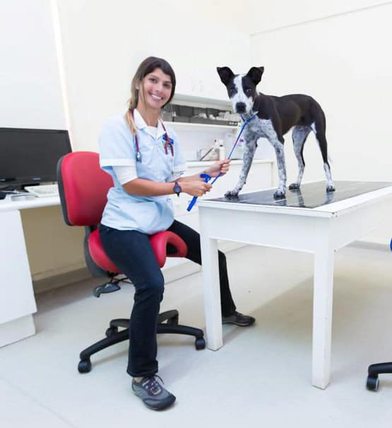 Bambach saddle seat for veterinary